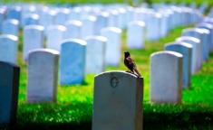 A morte e o dano moral